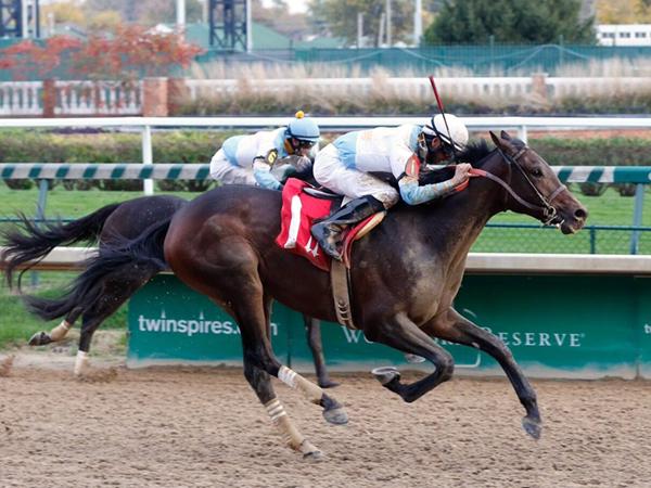 Mo Tom Race Horse